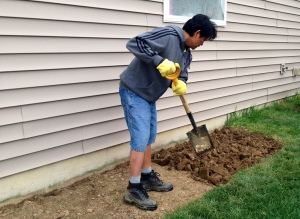 Using shovel, aerate the soil.