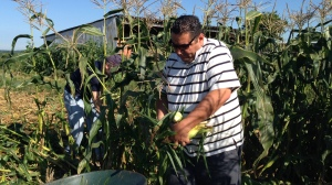 Pastor Jesus and Bryce worked hard to provide corn for those in need